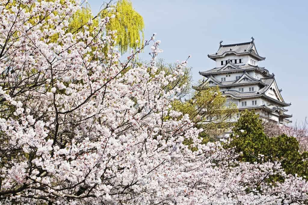 himeji-castle-sakura-trees