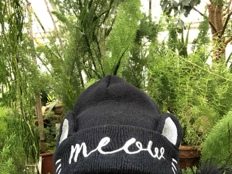 botanicheska-meow