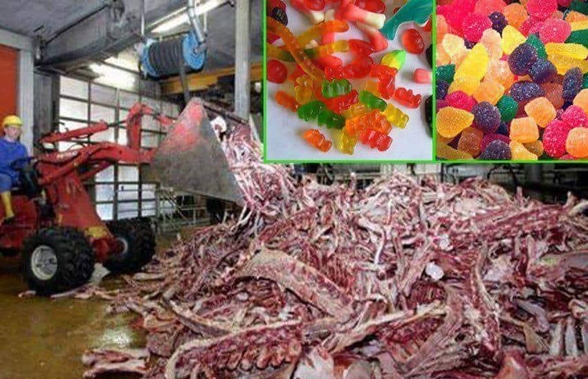 gelatine-cruelty