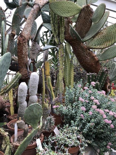 kaktusi-i-agaveta