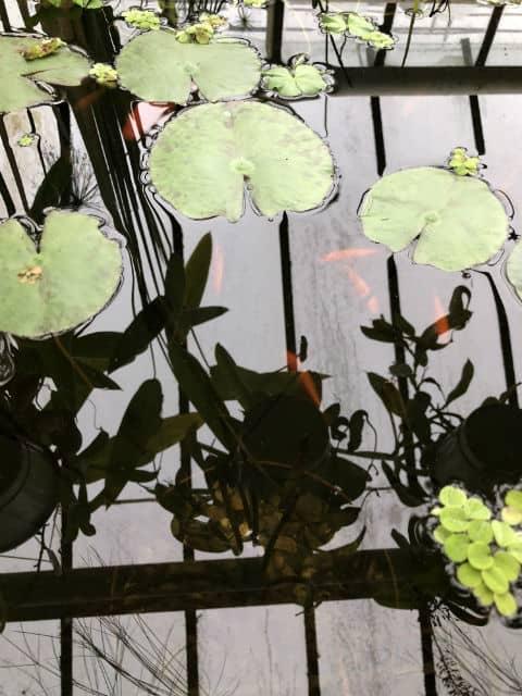 lilii-i-ribki