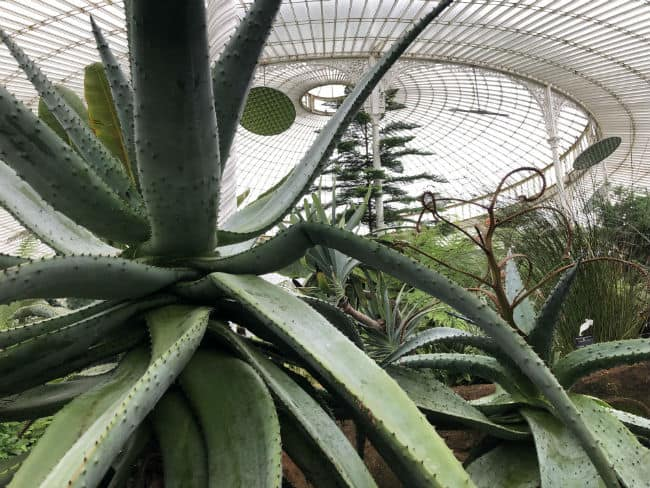 glasgow-botanical-garden-day-1-20