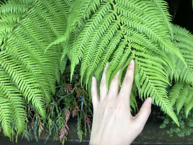 glasgow-botanical-garden-day-1-22