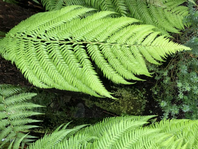 glasgow-botanical-garden-day-1-23
