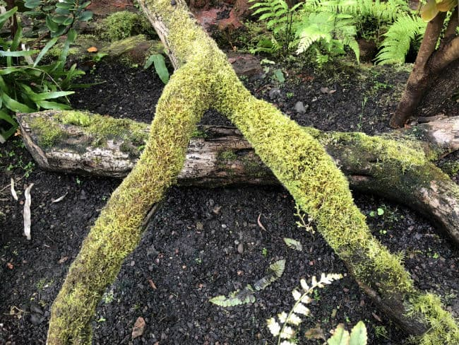 glasgow-botanical-garden-day-1-27