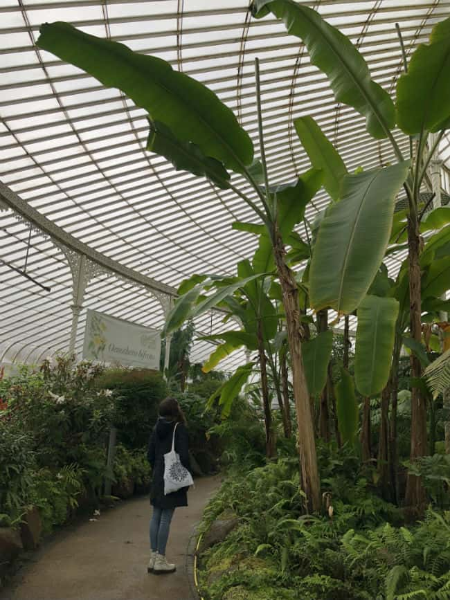 glasgow-botanical-garden-day-1-33