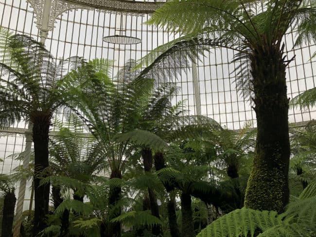 glasgow-botanical-garden-day-1-38