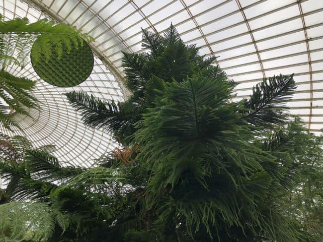glasgow-botanical-garden-day-1-42