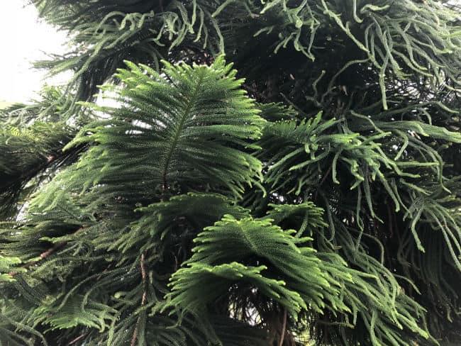 glasgow-botanical-garden-day-1-43