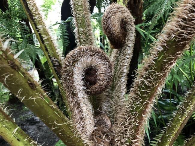glasgow-botanical-garden-day-1-44