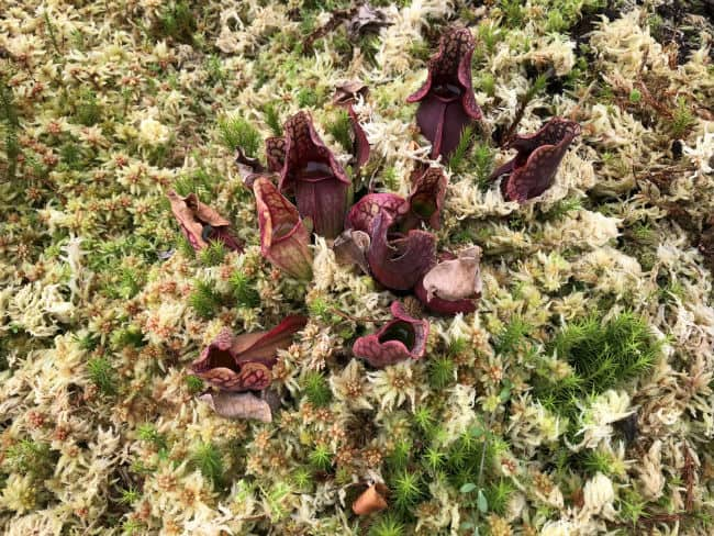glasgow-botanical-garden-day-1-8