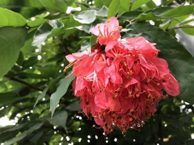 glasgow-botanical-garden-day-2-11