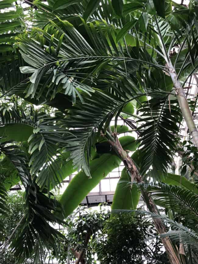glasgow-botanical-garden-day-2-13