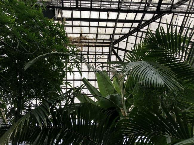 glasgow-botanical-garden-day-2-19