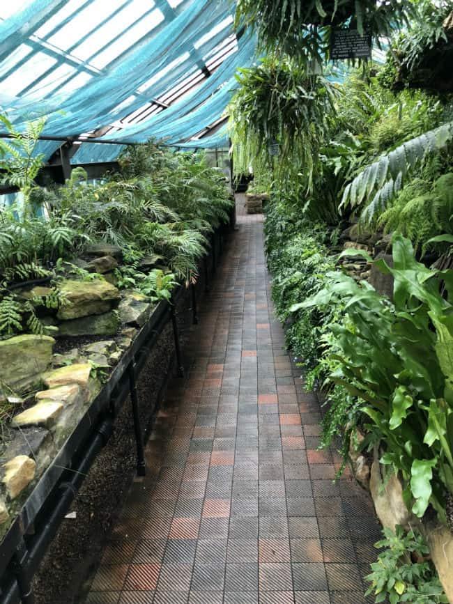 glasgow-botanical-garden-day-2-20