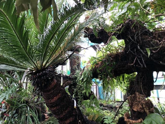 glasgow-botanical-garden-day-2-21