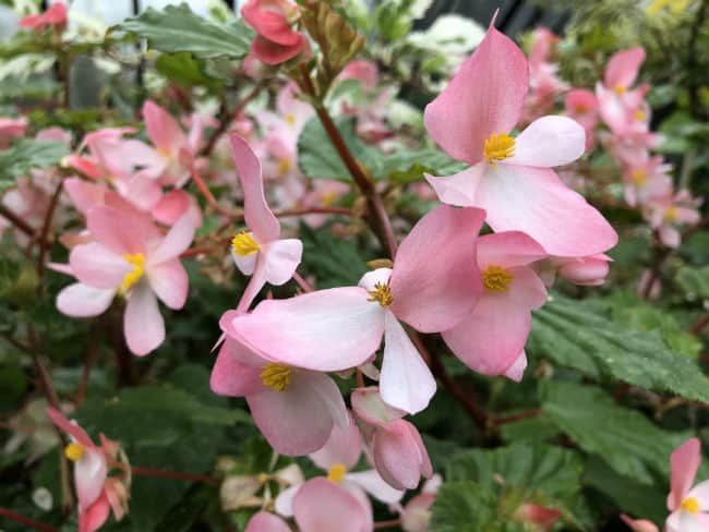 glasgow-botanical-garden-day-2-23
