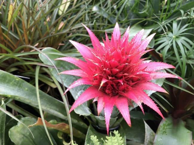 glasgow-botanical-garden-day-2-29