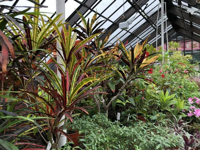 glasgow-botanical-garden-day-2-33