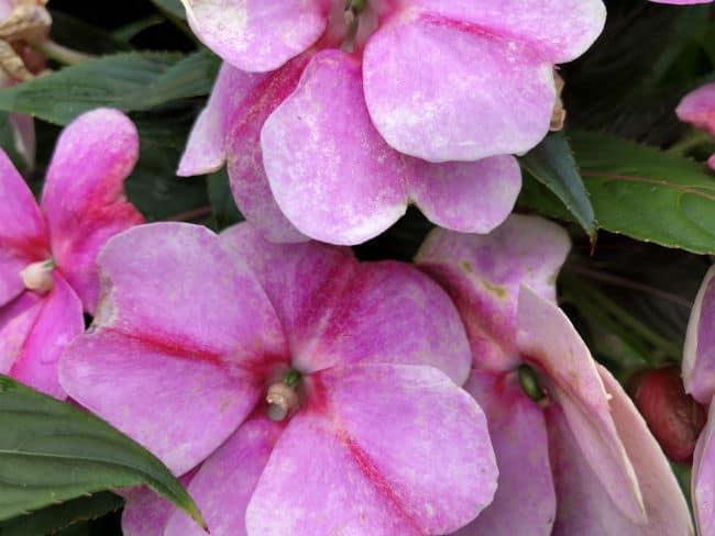 glasgow-botanical-garden-day-2-34