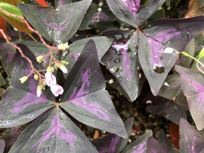 glasgow-botanical-garden-day-2-35