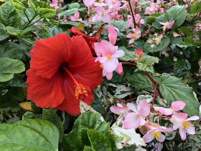 glasgow-botanical-garden-day-2-36