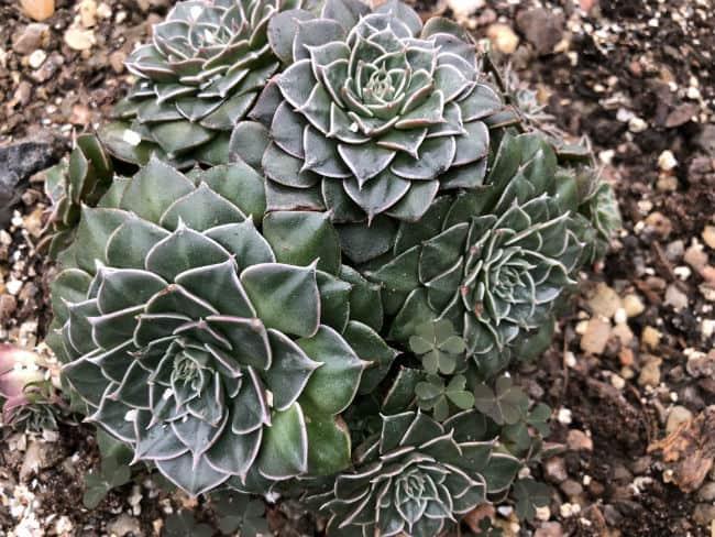 glasgow-botanical-garden-day-2-7