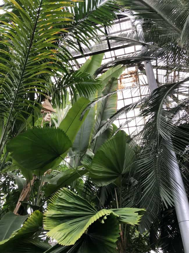 glasgow-botanical-garden-day-2-8